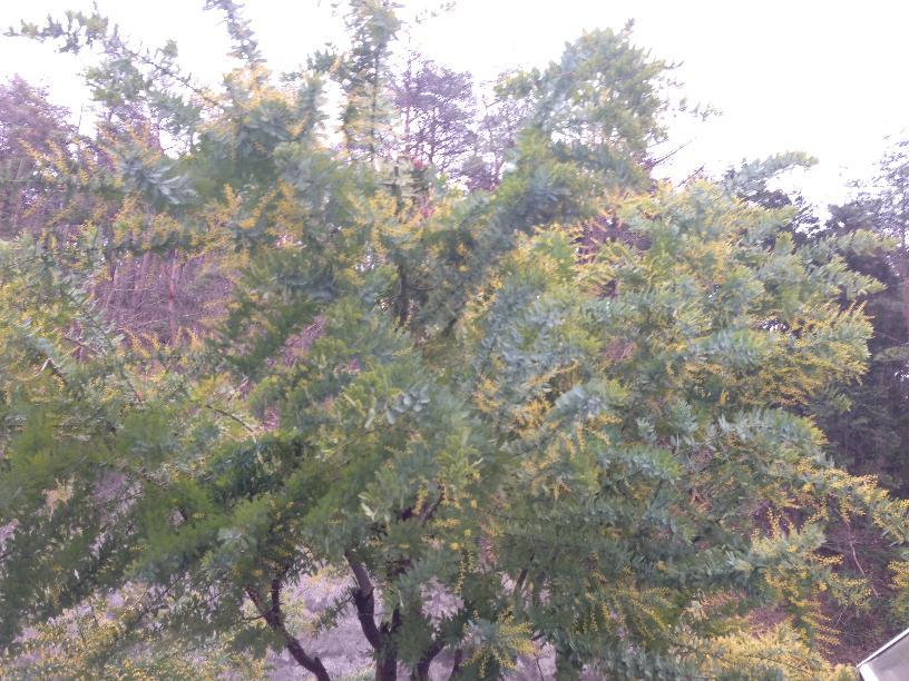 Evernote Camera Roll 20150317 180119 (2)